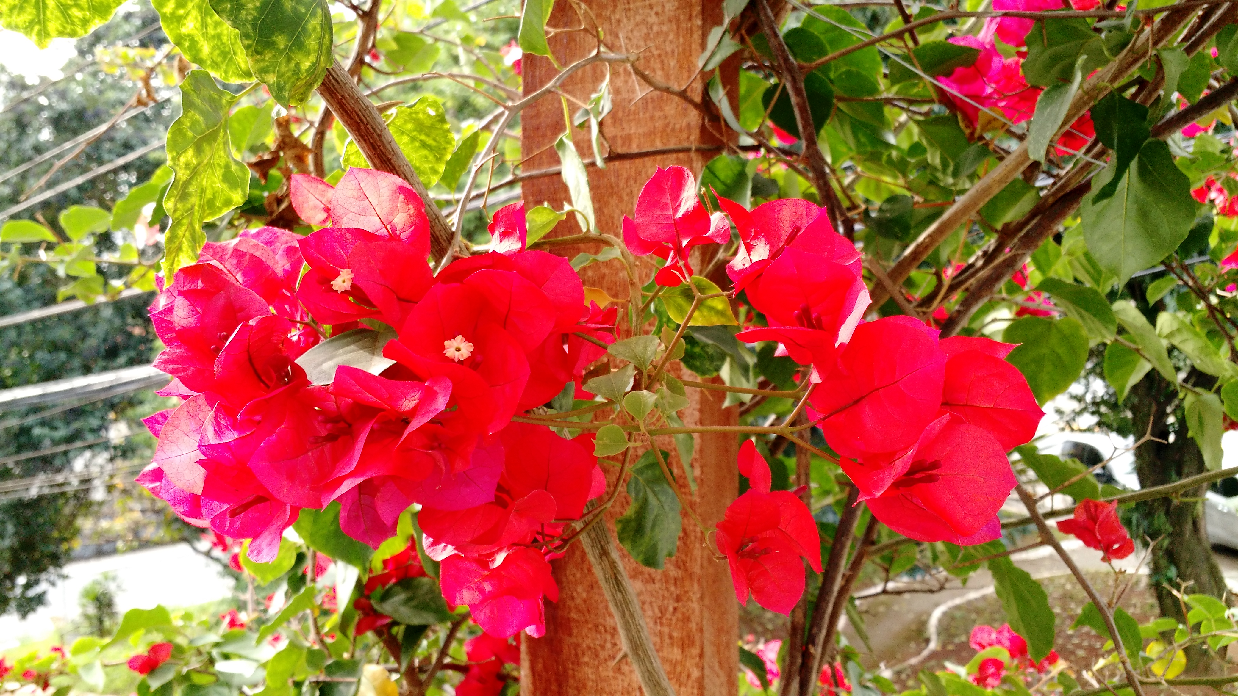 a-beleza-da-natureza-2