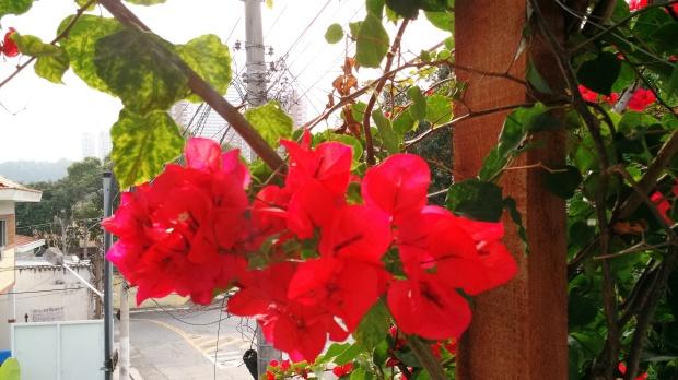 a-beleza-da-natureza-3