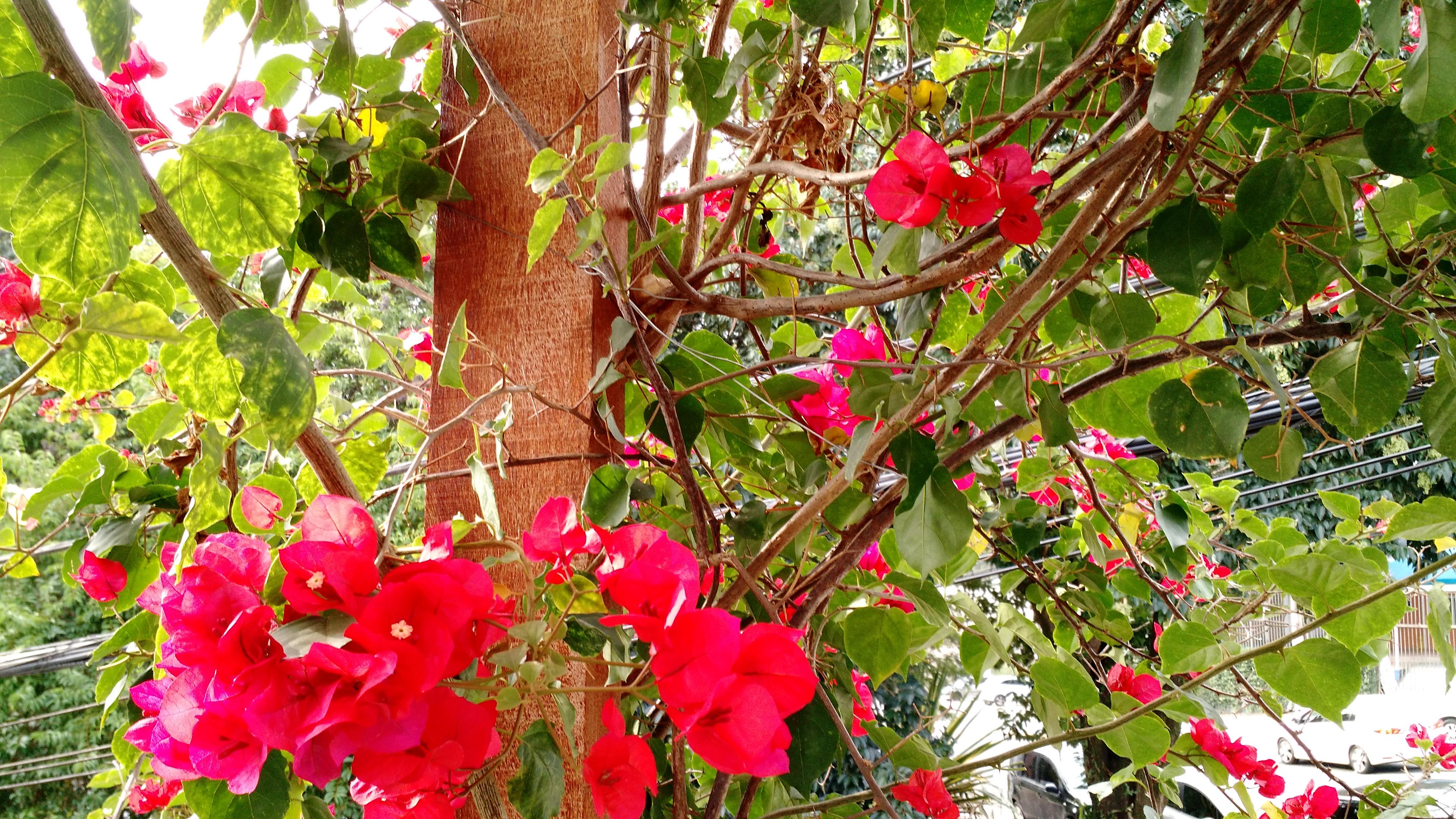 a-beleza-da-natureza-4