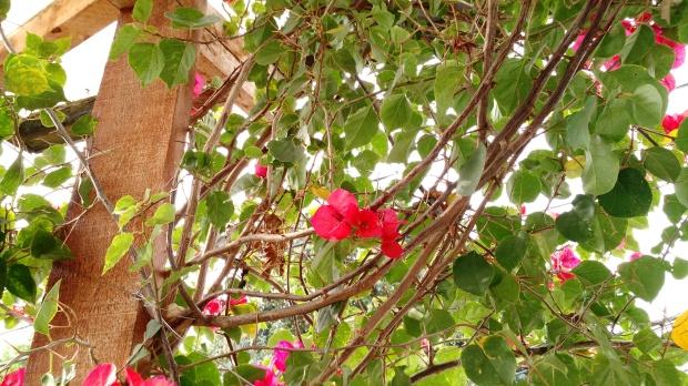 a-beleza-da-natureza-5