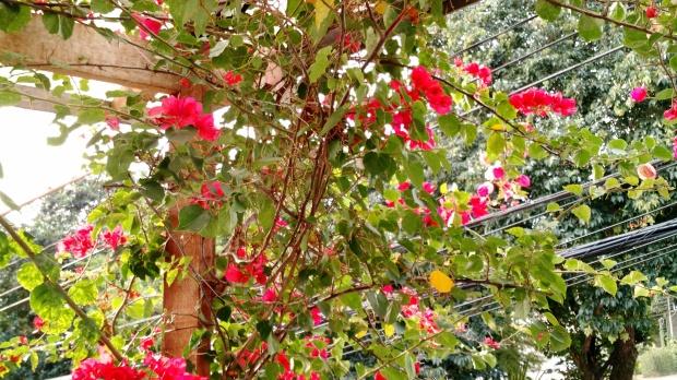 a-beleza-da-natureza-7