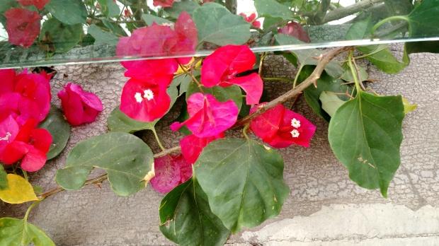 a-beleza-da-natureza-9