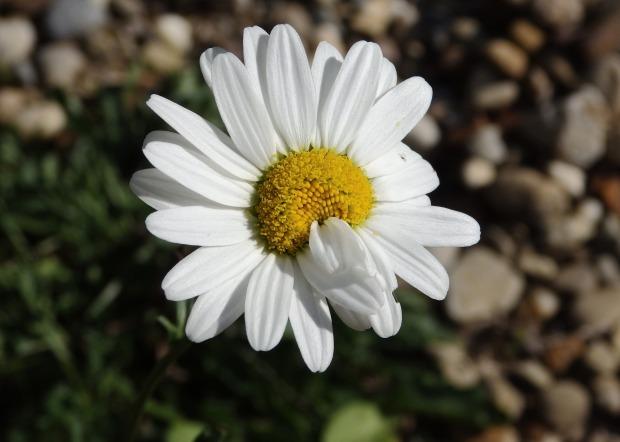 blog-senhorita-deise-pureza