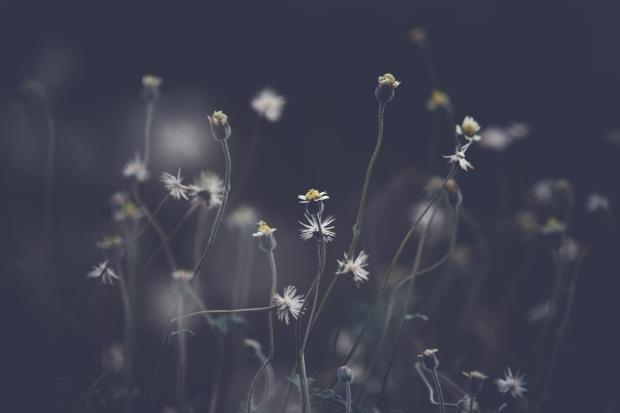 blog-senhorita-deise-salmos-142