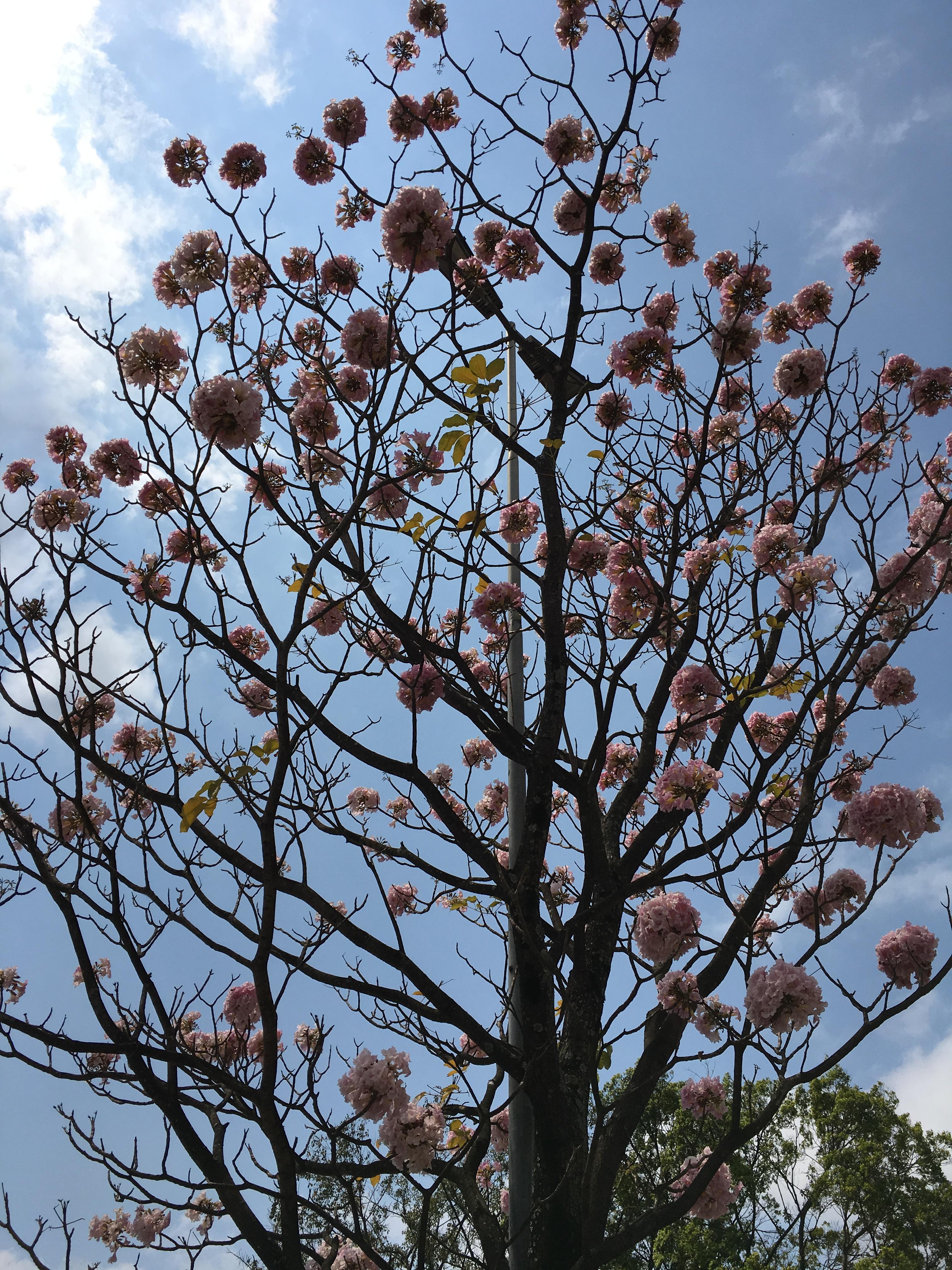 blog-senhorita-deise-olá-primavera-2