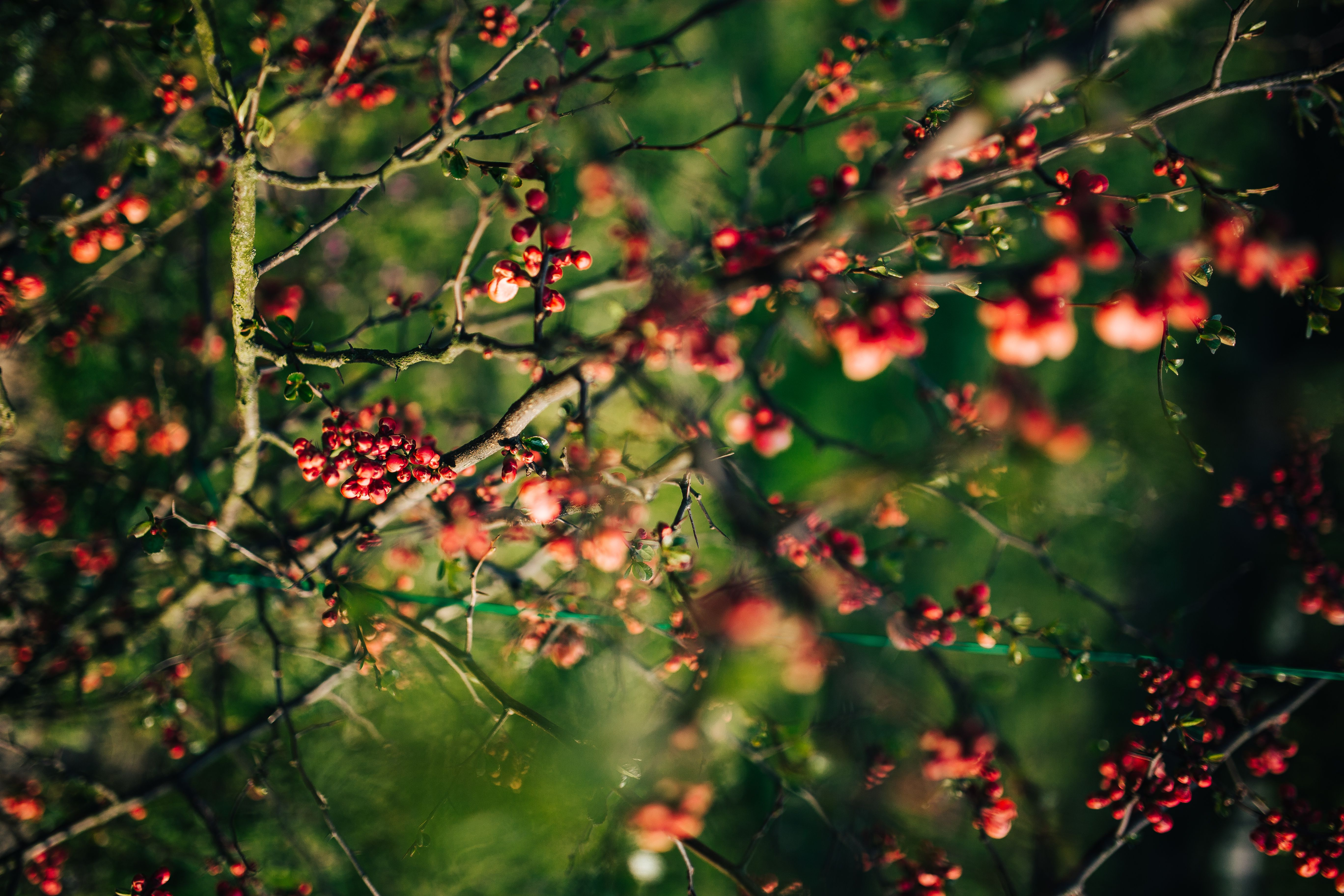 blog-senhorita-deise-faith-hope-and love
