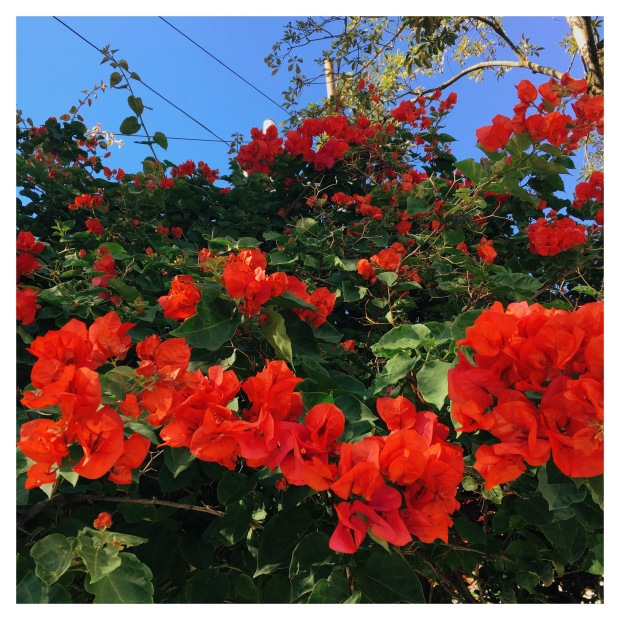 blog-senhorita-deise-ola-primavera-3