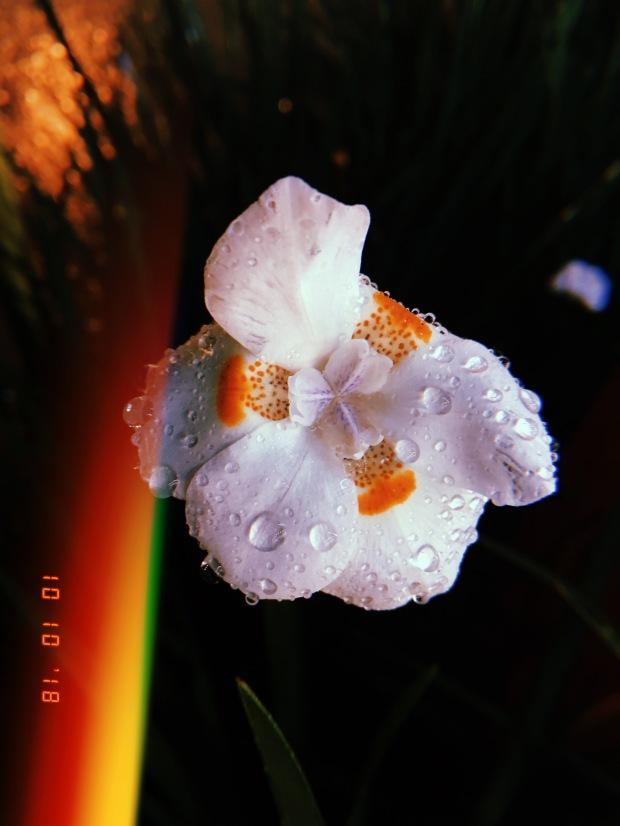 blog-senhorita-deise-como-o-orvalho