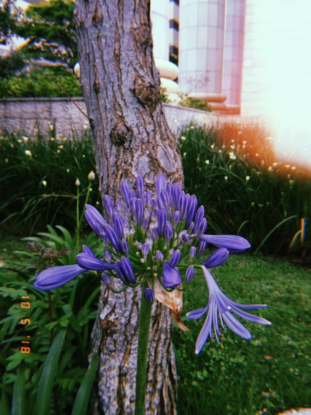 blog-senhorita-deise-despedida