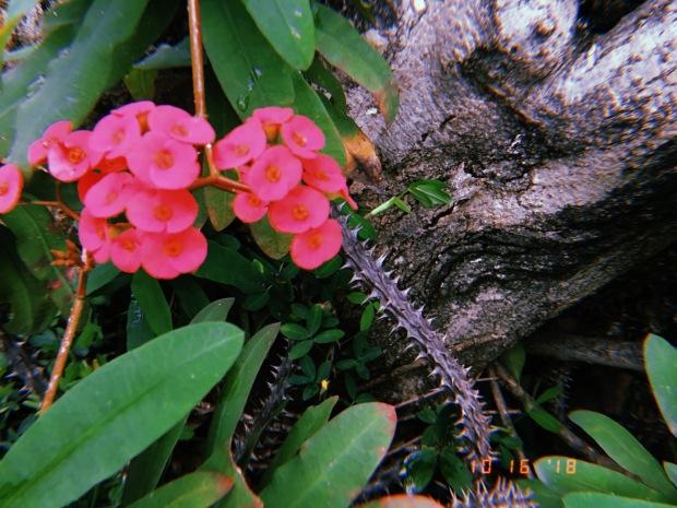 blog-senhorita-deise-benignidade