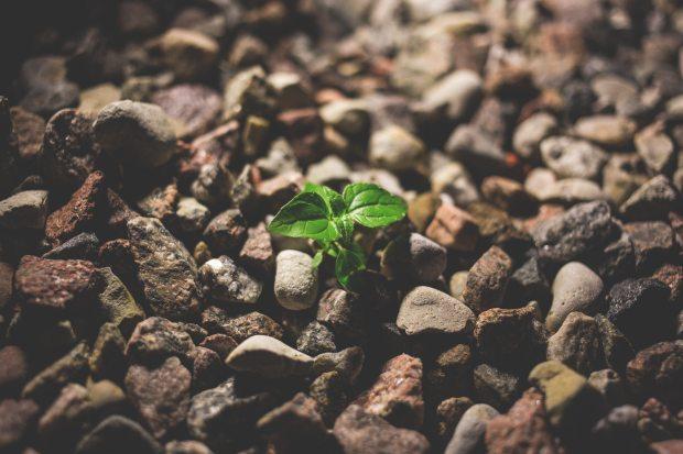 blog-senhorita-deise-recompensa