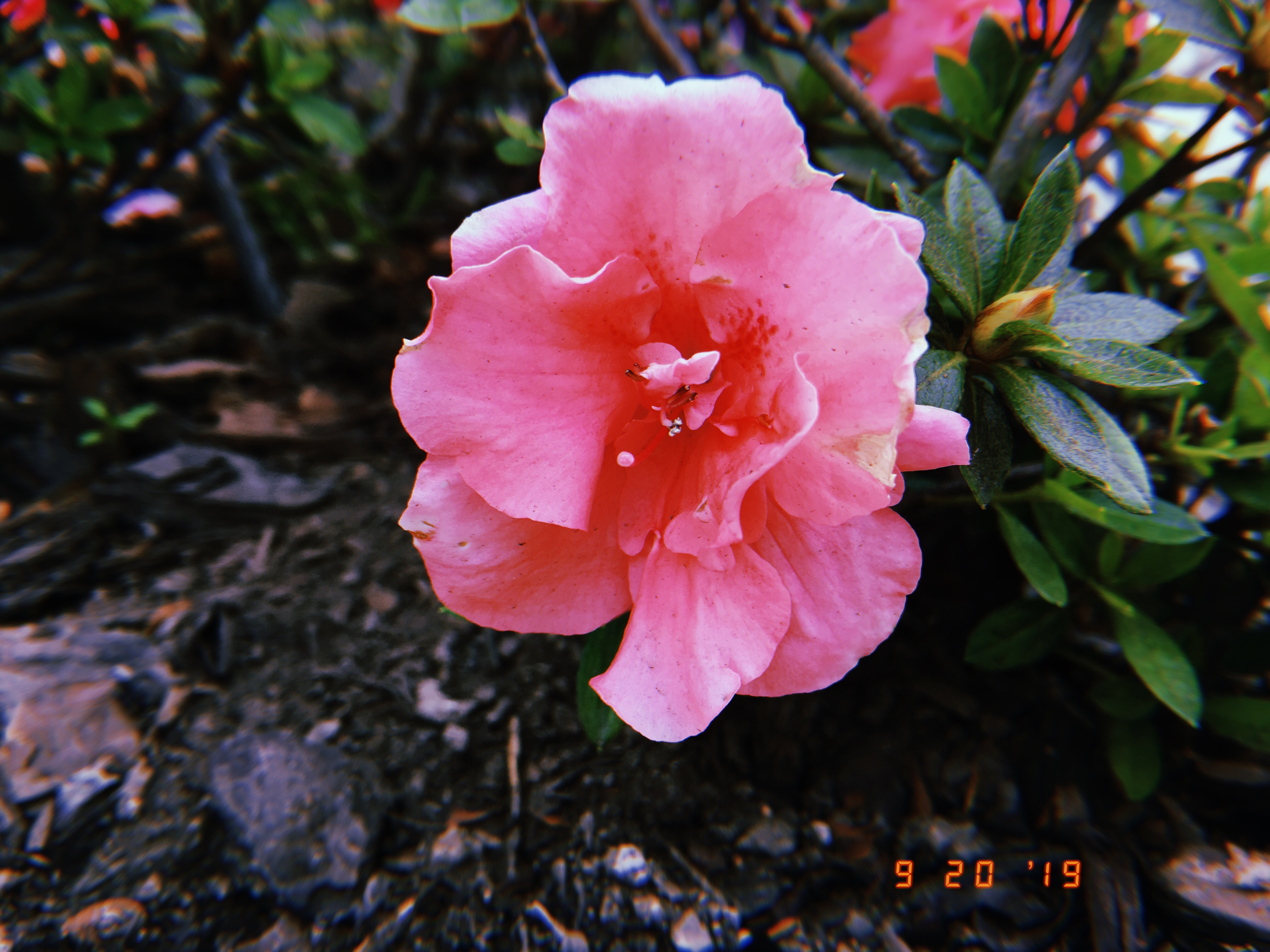 blog-senhorita-deise-ola-primavera-4-3
