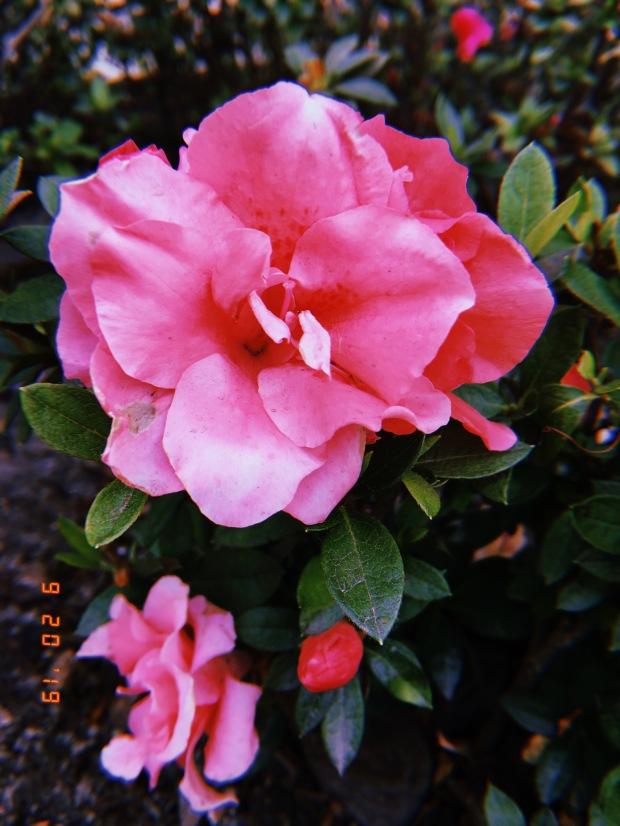 blog-senhorita-deise-ola-primavera-4-4